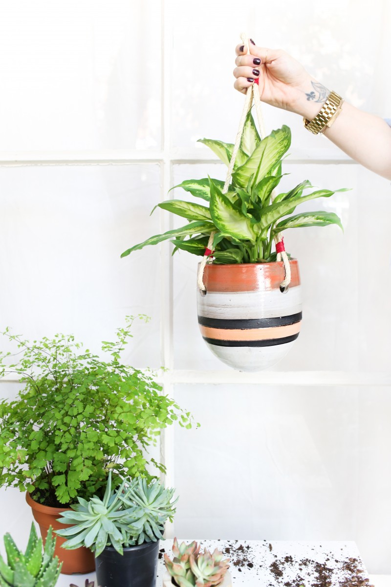 Hanging Flower Baskets Home Depot Canada : Indoor hanging plants lowes terrific plant